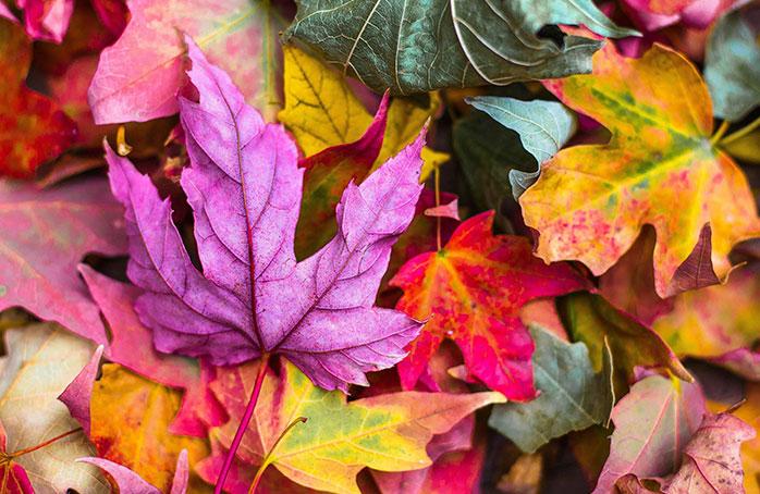 Tendencias otoño-invierno Pantone